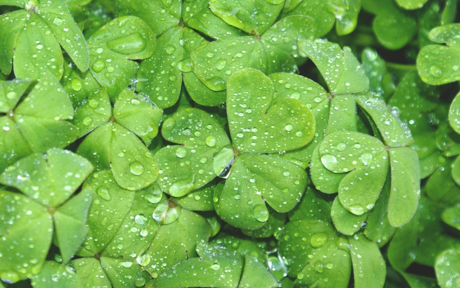 A Word About Saint Patrick